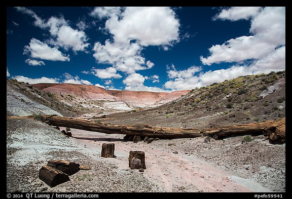 Black petrified wood, Onyx Bridge, Painted Desert. Petrified Forest National Park (color)