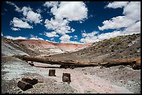 Black petrified wood, Onyx Bridge, Painted Desert. Petrified Forest National Park ( color)
