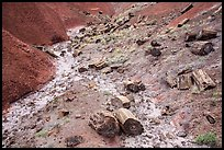 Petrified logs and iron oxide colored badlands. Petrified Forest National Park ( color)