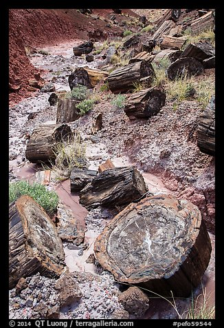 Logs of black petrified wood in Painted Desert. Petrified Forest National Park (color)