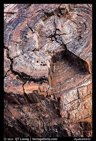 Close-up of black petrified log. Petrified Forest National Park (color)