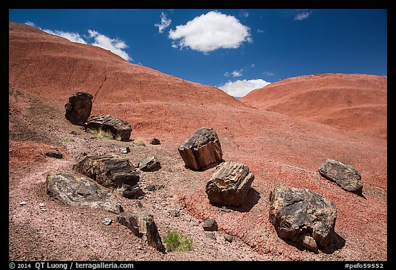 Red Desert badlands hills and black petrified logs. Petrified Forest National Park (color)
