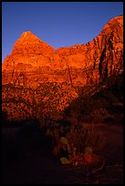 Cactus and Watchman at sunset. Zion National Park, Utah, USA.