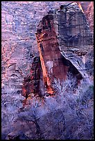 The Pulpit and bare trees, Zion Canyon. Zion National Park, Utah, USA. (color)