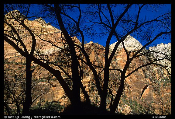 Canyon walls seen through bare trees, Zion Canyon. Zion National Park (color)