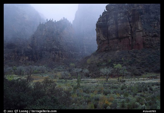Rainy afternoon, Zion Canyon. Zion National Park, Utah, USA.