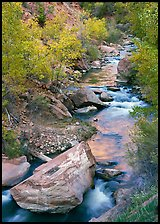 Boulders and Virgin River in  fall. Zion National Park, Utah, USA.