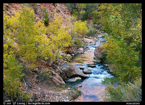Virgin river, trees in fall foliage, and boulders. Zion National Park (color)