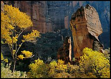 Tree in autumn foliage and the Pulpit, temple of Sinawava. Zion National Park, Utah, USA.