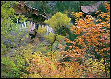 Cliff, waterfall, and trees in fall colors, near  first Emerald Pool. Zion National Park, Utah, USA. (color)