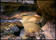 North Creek flowing over fallen leaves, the Subway. Zion National Park, Utah, USA. (color)
