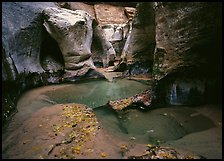 Pools and slot canyon rock walls, the Subway. Zion National Park, Utah, USA.