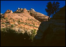 Pine and hoodoos near Canyon View, early morning. Zion National Park, Utah, USA. (color)
