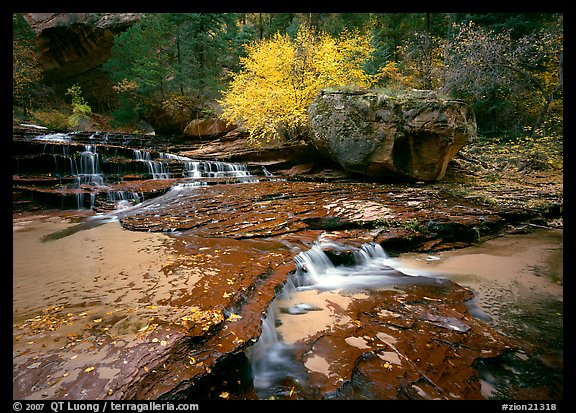 Terraced cascades and tree in fall foliage, Left Fork of the North Creek. Zion National Park (color)