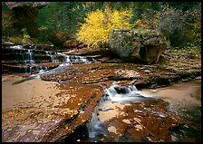 Terraced cascades and tree in fall foliage, Left Fork of the North Creek. Zion National Park, Utah, USA.