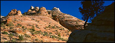 Sandstone swirls, Zion Plateau. Zion National Park (Panoramic color)