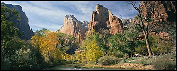 Landscape with trees and tall sandstone towers. Zion National Park (Panoramic color)