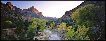 Virgin River, trees, and Watchman at sunset. Zion National Park (Panoramic color)