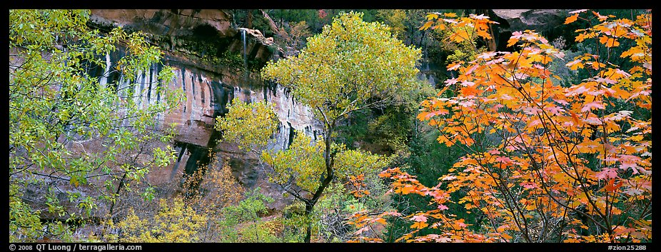Fall colors and sandstone cliffs. Zion National Park (color)