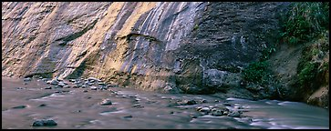 Wet gorge wall and Virgin River. Zion National Park (Panoramic color)