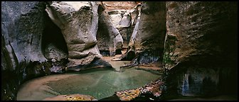 Sculptured walls of narrow gorge. Zion National Park (Panoramic color)