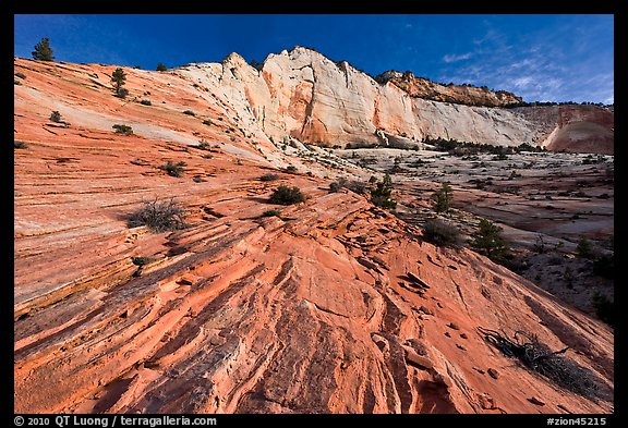 Pink sandstone swirls and white cliff. Zion National Park (color)