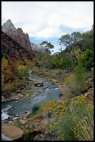 Virgin River in Zion Canyon, afternoon. Zion National Park, Utah, USA. (color)