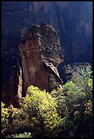 The Pulpit, temple of Sinawava, late morning. Zion National Park, Utah, USA. (color)