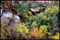 Sandstone cliff, waterfall, and trees in autum colors l. Zion National Park, Utah, USA. (color)