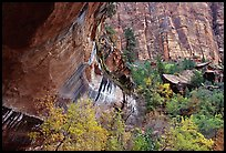 Sandstone cliff and trees in autumn foliage. Zion National Park, Utah, USA. (color)