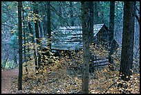 Abandoned historical log cabin, Middle Fork of Taylor Creek. Zion National Park, Utah, USA. (color)