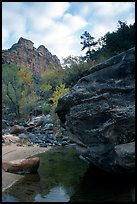 Left Fork of the North Creek. Zion National Park, Utah, USA. (color)