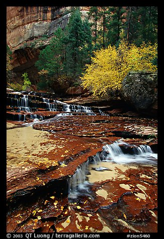 Cascades over terraces, Left Fork of the North Creek. Zion National Park (color)
