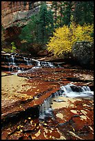 Cascades over terraces, Left Fork of the North Creek. Zion National Park, Utah, USA. (color)
