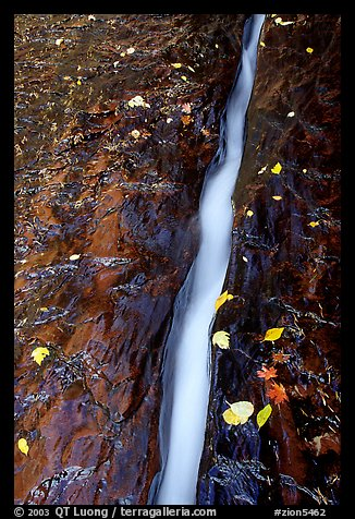 Six inch wide channel where the water of the Left Fork of the North Creek runs. Zion National Park, Utah, USA.