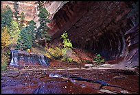 Cascade and alcove, Left Fork of the North Creek. Zion National Park, Utah, USA. (color)