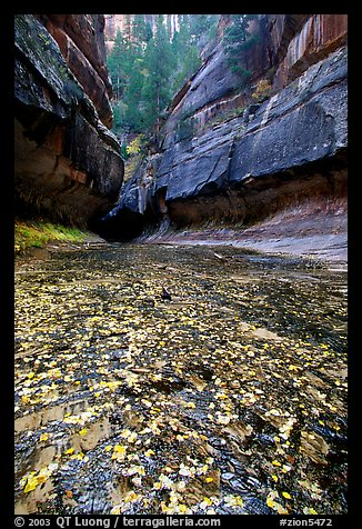 Entrance of the Subway, Left Fork of the North Creek. Zion National Park (color)