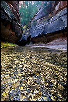 Entrance of the Subway, Left Fork of the North Creek. Zion National Park, Utah, USA. (color)