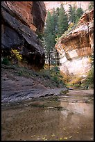 Cliffs near the Subway, Left Fork of the North Creek. Zion National Park, Utah, USA. (color)
