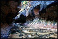 The Subway, a tunnel shaped like a round tube, Left Fork of the North Creek. Zion National Park, Utah, USA. (color)