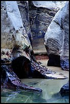 Pools and Rock walls sculptured by fast flowing water,  Subway, Left Fork of  the North Creek. Zion National Park, Utah, USA. (color)