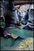 Pools and sculptured sandstone walls, the Subway, Left Fork of the North Creek. Zion National Park, Utah, USA.