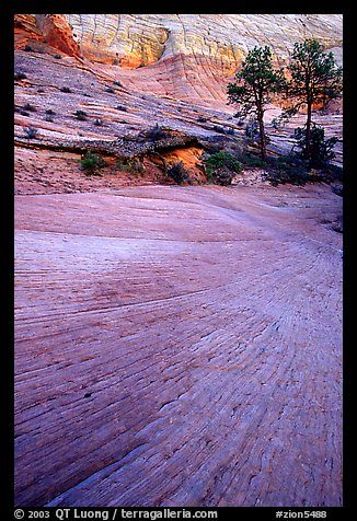 Sandstone striations, Zion Plateau. Zion National Park (color)