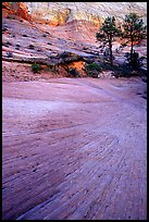 Sandstone striations, Zion Plateau. Zion National Park, Utah, USA. (color)