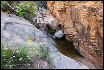 Wildflowers at mouth of Hidden Canyon. Zion National Park ( color)