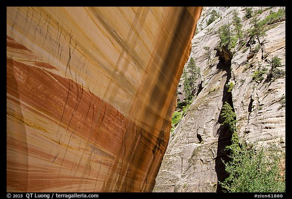 Sheer wall with desert varnish and wall with trees, Mystery Canyon. Zion National Park (color)