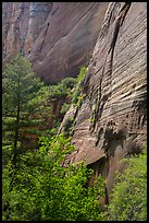 Verdant vegetation and canyon walls, Mystery Canyon. Zion National Park ( color)