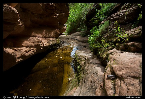 Frog and stream, Mystery Canyon. Zion National Park (color)