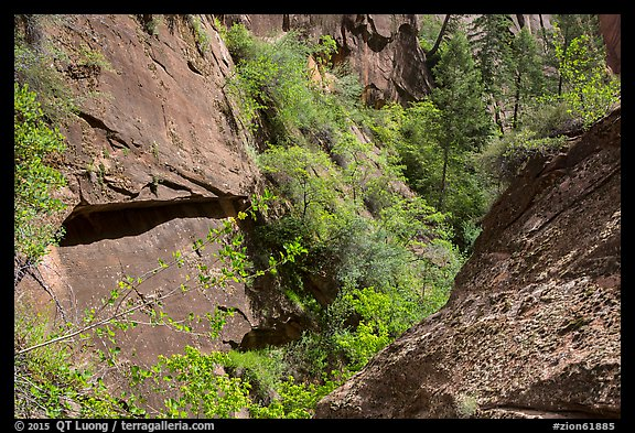 Verdant Mystery Canyon. Zion National Park (color)