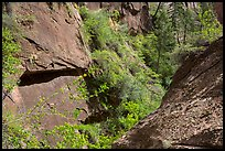 Verdant Mystery Canyon. Zion National Park ( color)